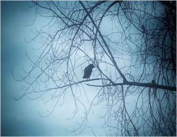 FTF Raven