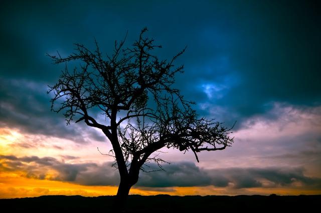 tree-213980_640