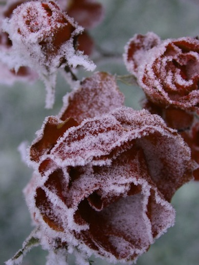 frost-3182542_640